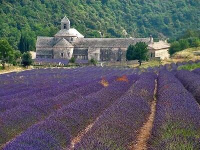 Vacances en Provence : Senanque